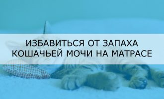 Избавиться от запаха кошачьей мочи на матрасе