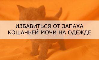Избавиться от запаха кошачьей мочи на одежде